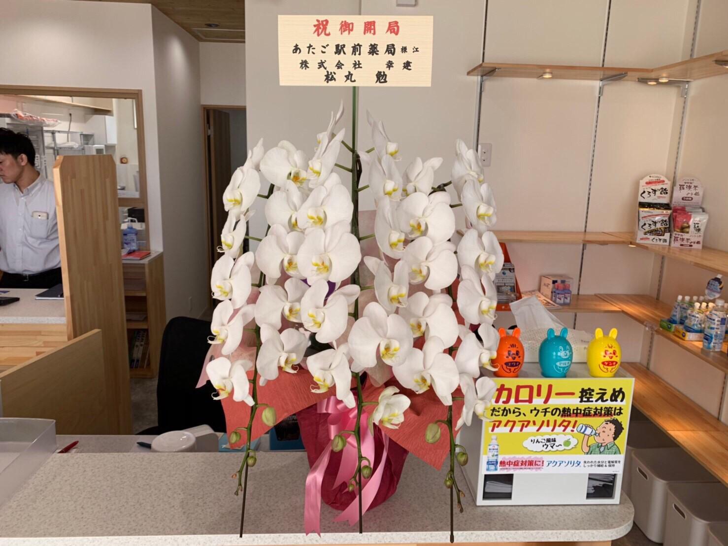 胡蝶蘭鉢植え【白】